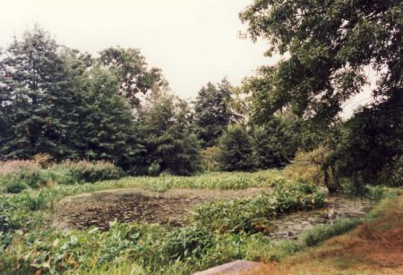 WETLANDS - NEW YORK BOTANICAL GARDEN